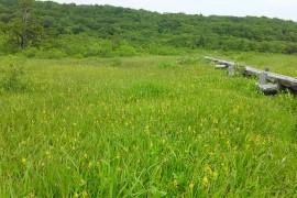 世界谷地と木道